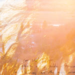 AWKI_WEB_6_goldenhair